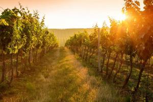 Weinreisen HOFER REISEN