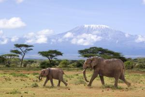 Kenia - Baden & Safari