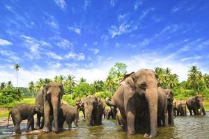Sri Lanka - Familienrundreise & Baden