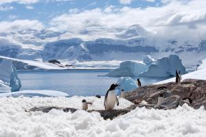 Antarktis & Südgeorgien - Kreuzfahrt