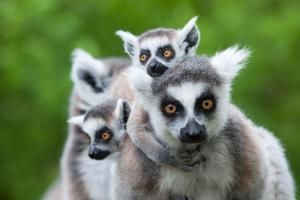 Madagaskar - Rundreise