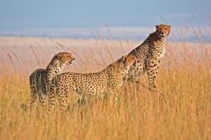 Tansania & Sansibar - Safari & Baden
