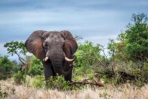 Südafrika - Safari & Luxuskreuzfahrt