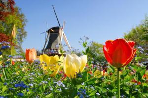 Holland zur Tulpenblüte - Busreise