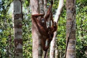 Kuala Lumpur & Sumatra - Rundreise