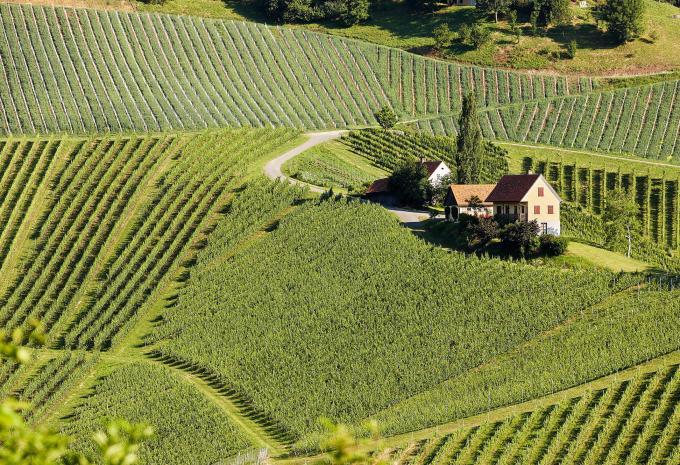 Weingut Lieschnegg | Weingut in Leutschach an der Weinstrae
