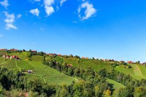 Schilcherland - Weingärten von Hochgrail Steiermark HOFER REISEN