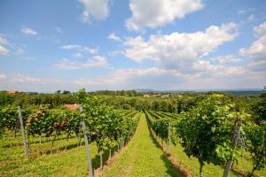 Die schönsten Regionen Österreichs Weinviertel HOFER REISEN