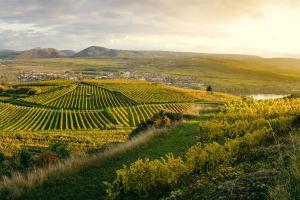Die schönsten Regionen Österreichs Wachau HOFER REISEN
