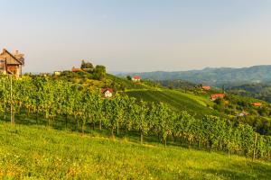 Südsteierisches Hügelland - Weinstraße Steiermark HOFER REISEN
