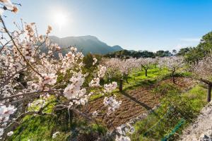 Mallorca zur Mandelblüte - Sternfahrt