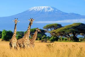 Kilimanjaro - Wanderreise & Safari